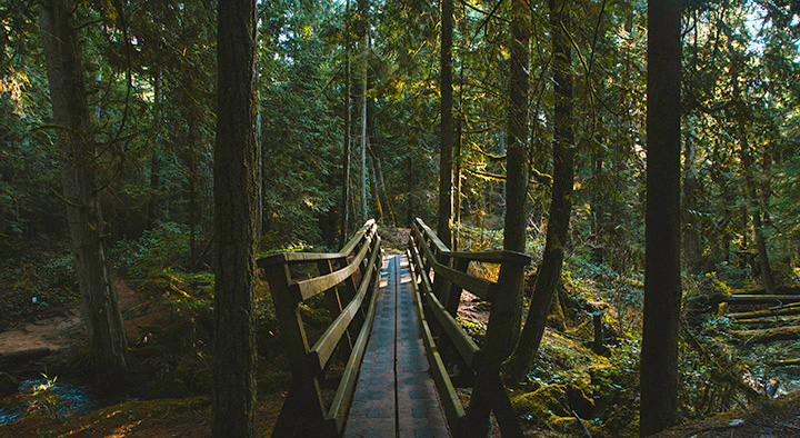 Wooden bridge in a temperate rainforest