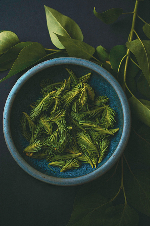 Spruce tips in a bowl