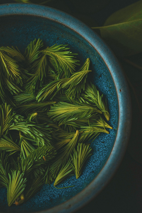 Close-up of spruce tips in a blue bowl