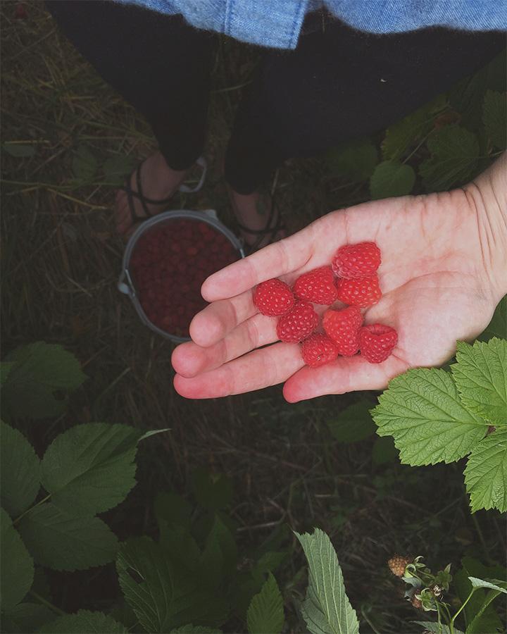 Raspberries in woman's hand