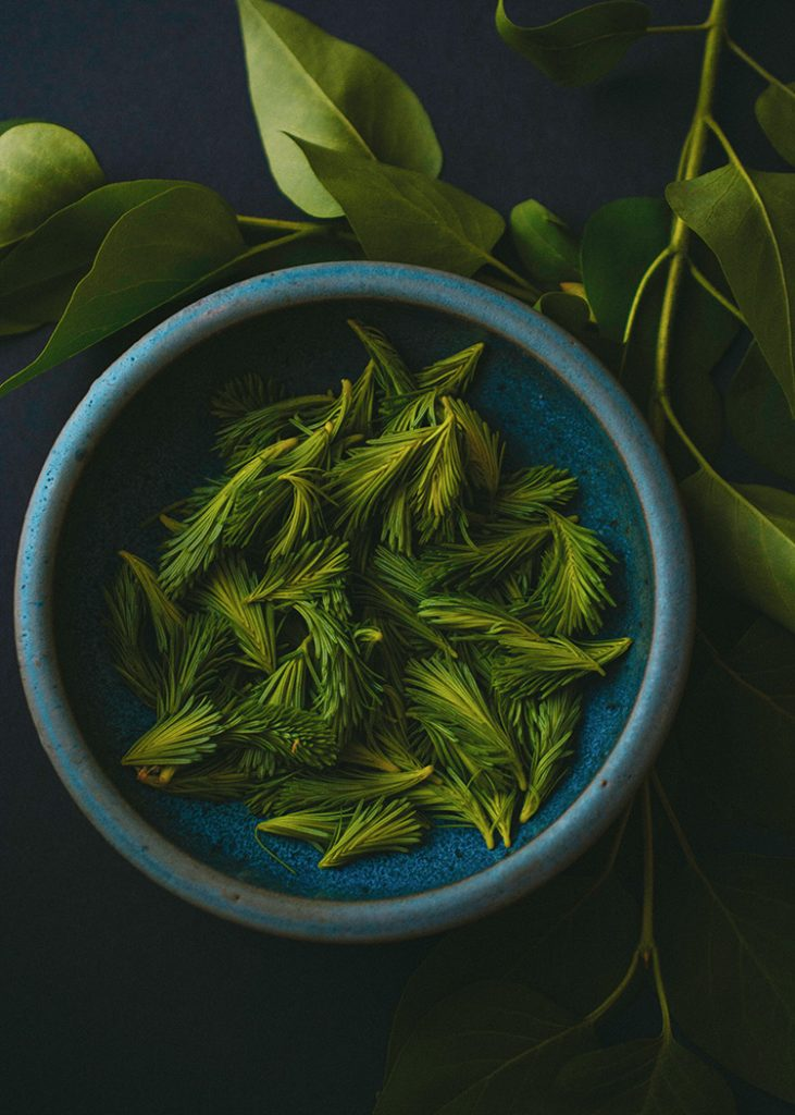 Close up shot of some harvested spruce buds in a blue bowl