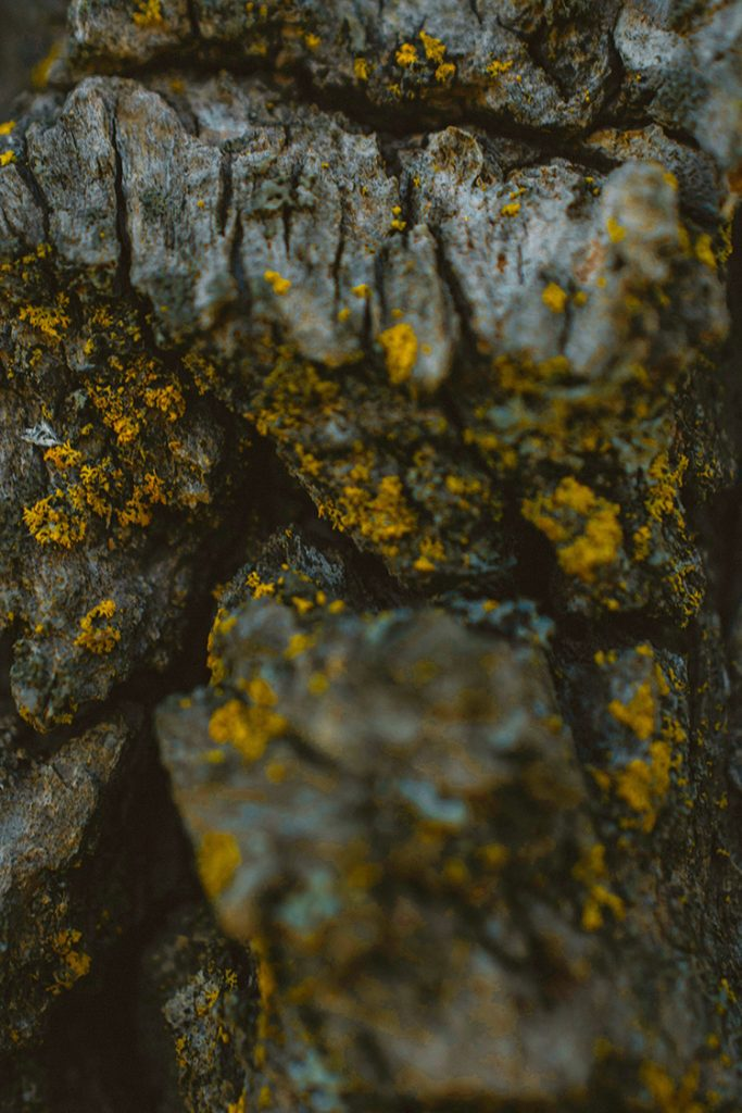 A rough textured tree bark with small spots of yellow fungi on it