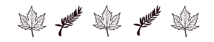 Sketch of a maple leaf and pine needles