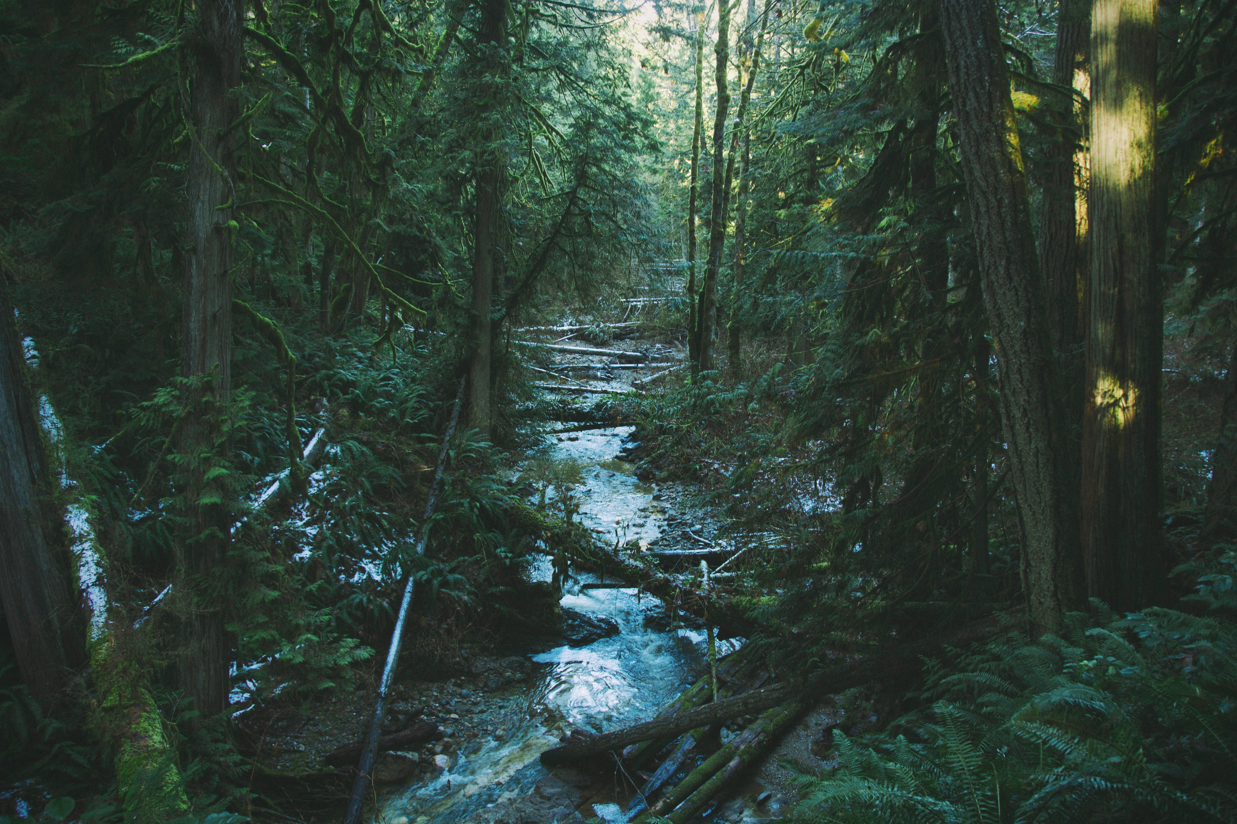A river flows through an old growth forest in British Columbia