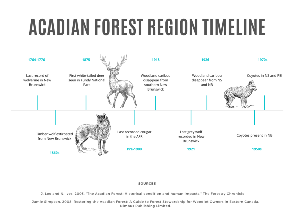 Timeline of the disappearance of the wolverine, woodland caribou, cougar, and grey wolf in the AFR. Also, the introduction of white-tailed deer and coyote.